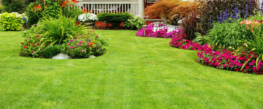 Need Expert Advice for Your Lawn?